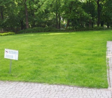 Koszenie trawy warszawa